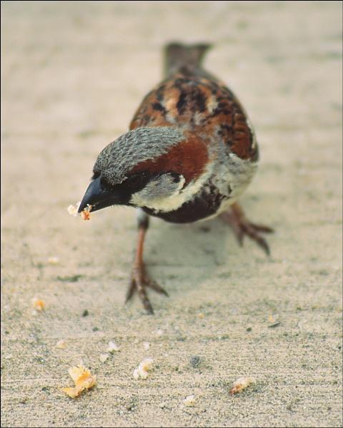 Birdie by mlewis