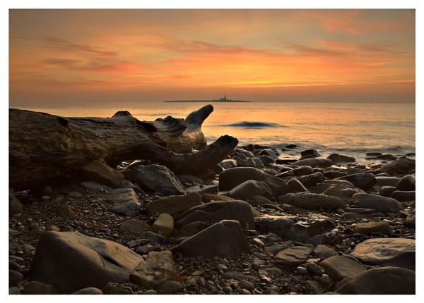 COQUET ISLAND 1 by Nixy