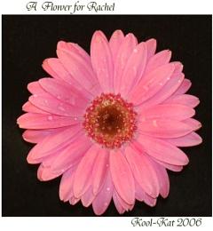 A Flower for Rachel