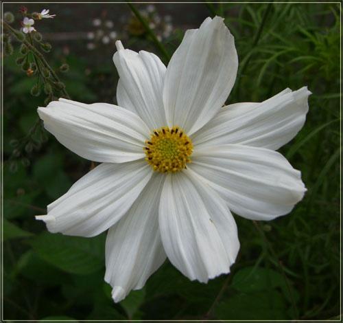 just white by vonny