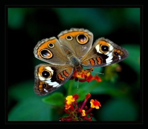 Butterfly Migration by JenG