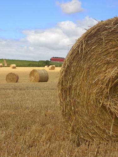 Round Bales, Cork by silep