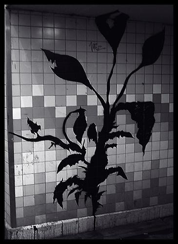 graffitti #2 by nowhereishere