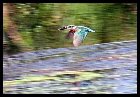 Kingfisher by jimbo75