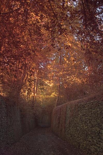Spooky Lane by redbulluk