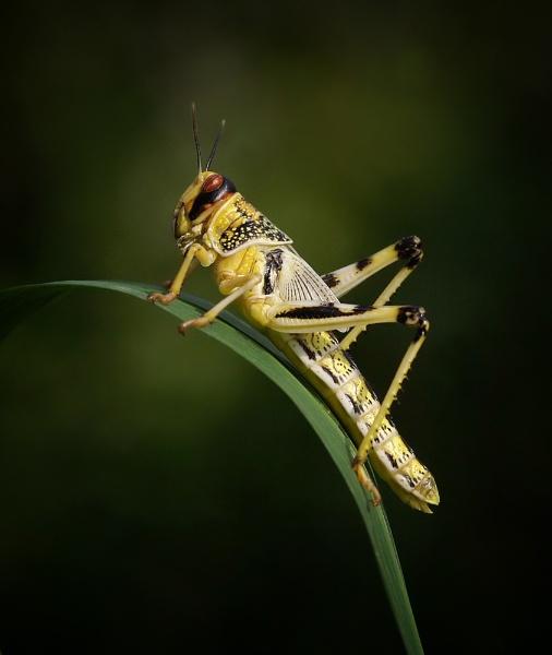 locust by clintnewsham