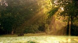 Local park at dawn