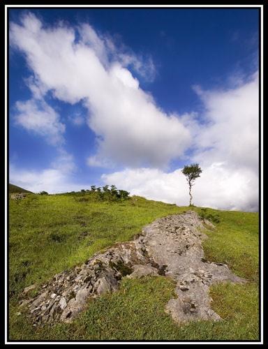 Wibbly Tree, Skye by MeanGreeny