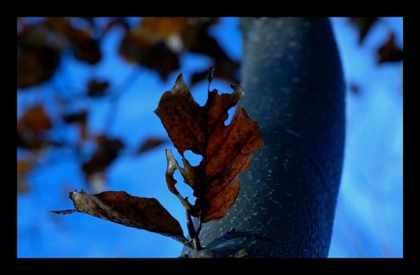 autumn by David_c