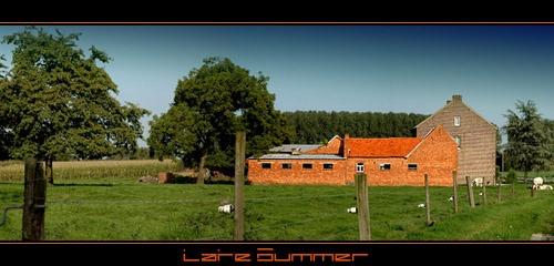 Late Summer by Hedgehog
