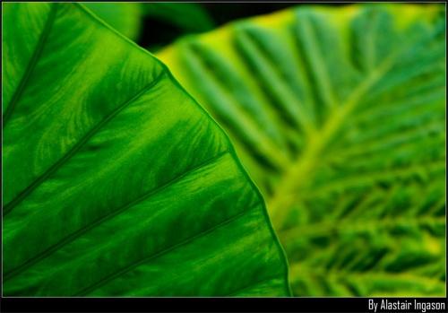 Leaf Design by TheBaron