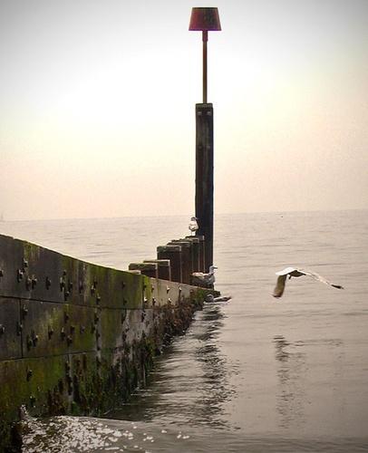 evening tide by bigbrum