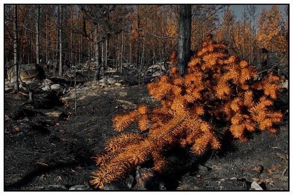 fire by zebhylon