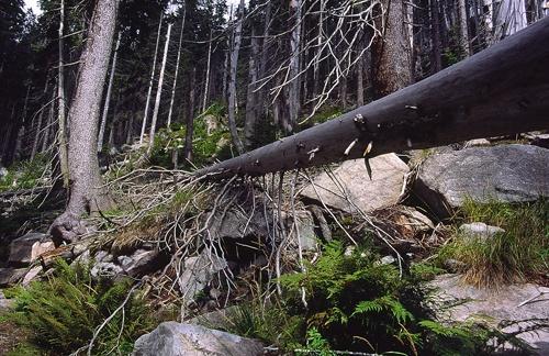 fallen tree by imagegrill