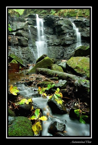 Autumninal Flow by MichaelAlex