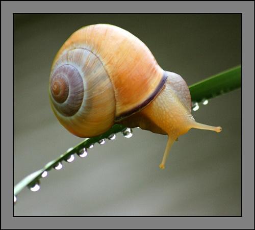 snail by mirceax