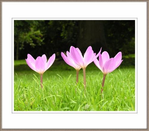 4 Flowers by grumpalot