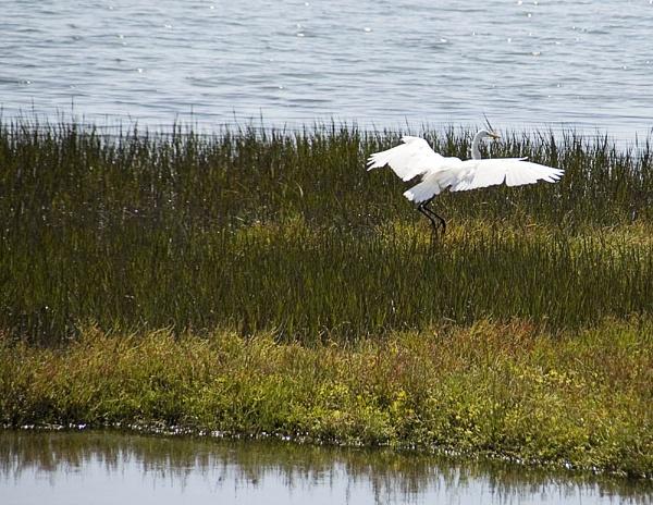 Bolsa Chica Wetlands by gajewski