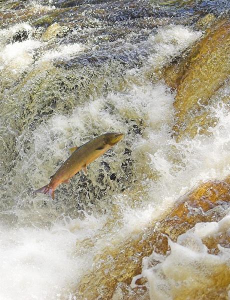 Upstream by Paul_Barr