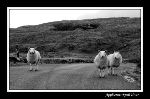 Rush Hour in Applecross Repost by lcmerrin