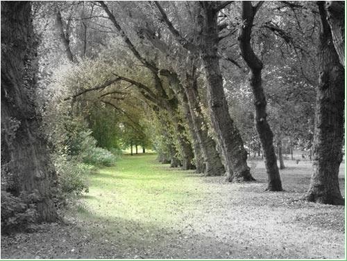 Paddock Wood by kemic