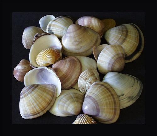 Sea Shells by AnnieK