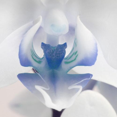Alien Flower. by SimPick
