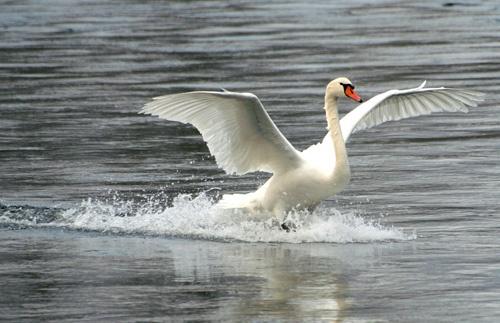 Splash Landing. by SimPick