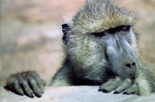 Kenya by toms