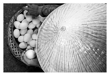 Eggs by Benji
