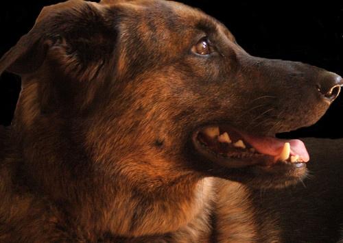 roo the dog by Simon-Gimson