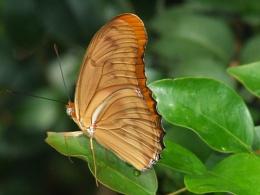 folded orange