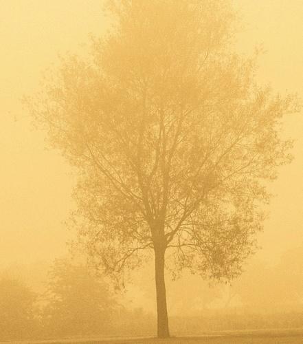 misty tree by marcusc