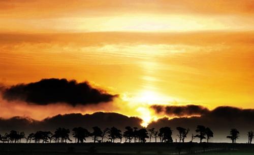 Trees Silhouette by pj.morley