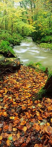 Autumn Splendour by davidentrican