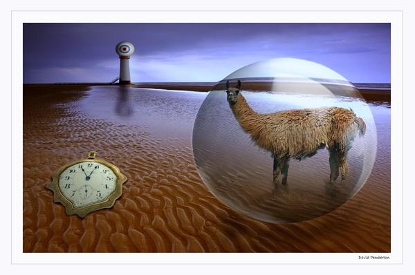 Dai the Llama by dpemberton