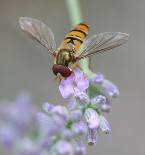 yellow fly by jsabmsc