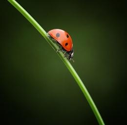 another ladybird