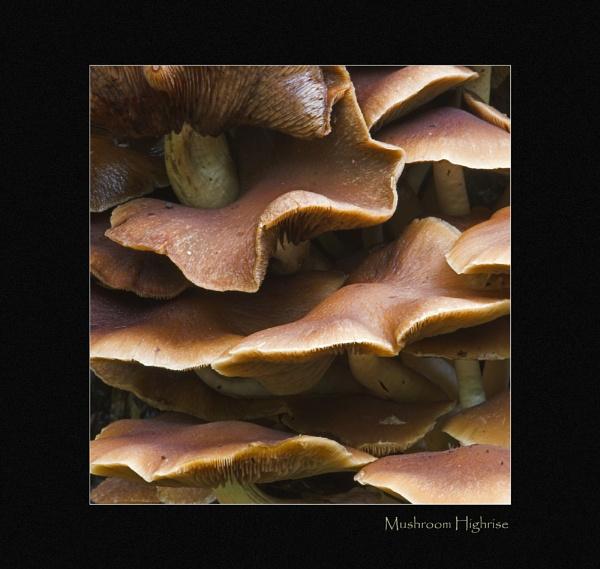Mushroom Highrise by VintageRed