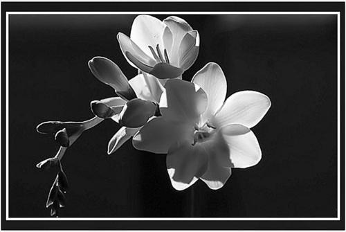 Just  black & white by Kool_Kat