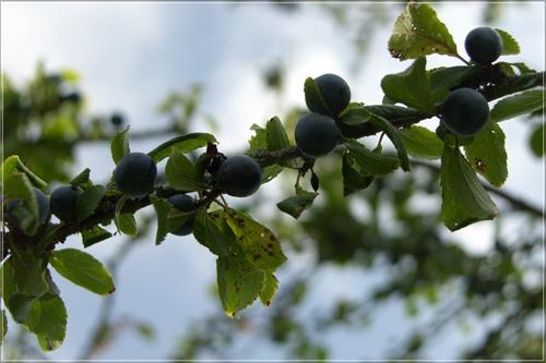berries by vonny