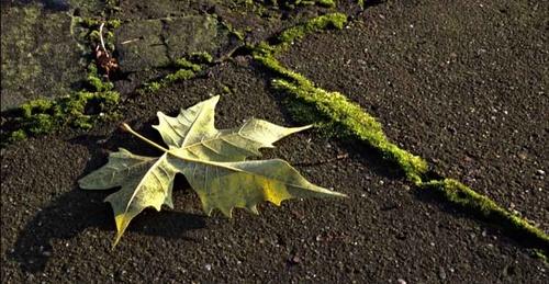 Fallen-leaf-No-3 by Rubecula