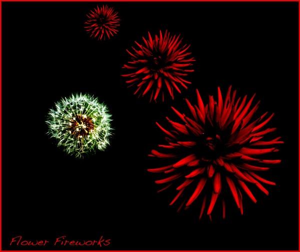 Flower Fireworks by mickf1