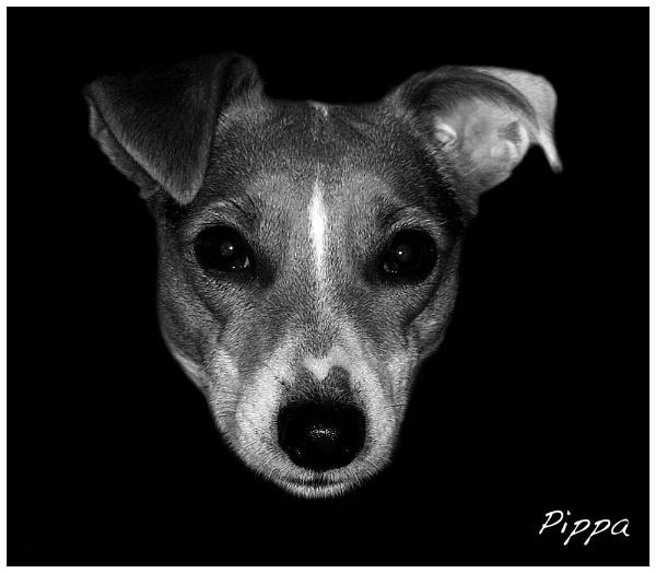 Pippa In B/W by mickf1