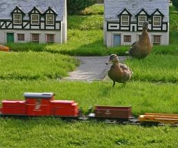 Giant ducks attack village