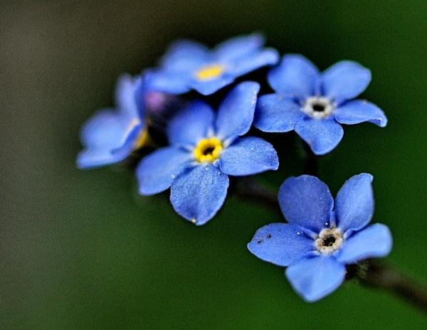 Blue Chain by ambmilan