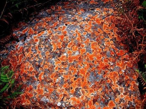 Orange Moss by Bimpon007