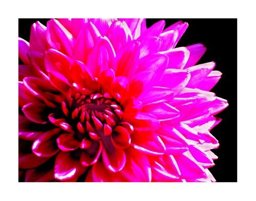 flourescent by blink182