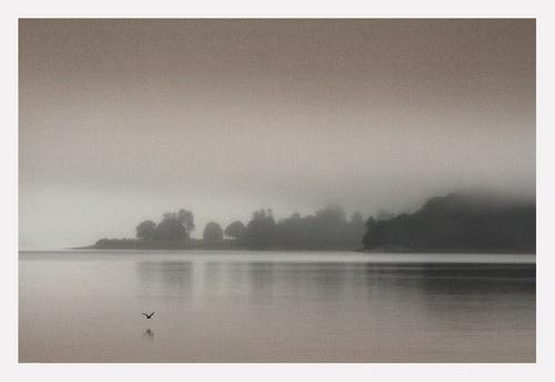 Rose Mist by becca_cusworth