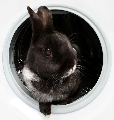 Laundry Mistake by becca_cusworth